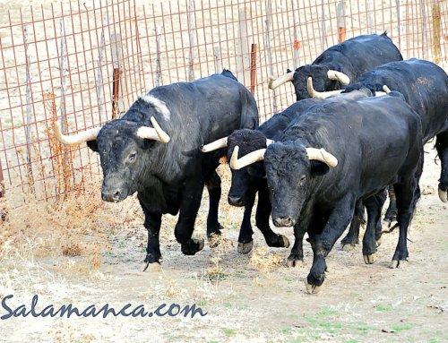 Dos minutos y 43 segundos para los toros de Puerto de San Lorenzo en las calles de Pamplona