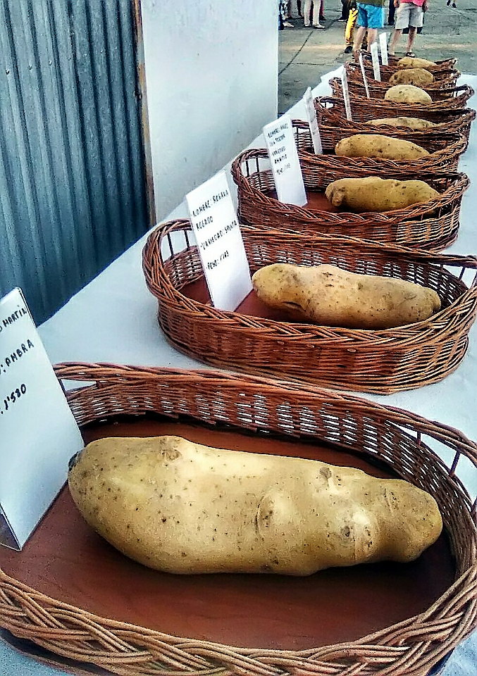Arabayona de Mógica Fiesta de la Patata