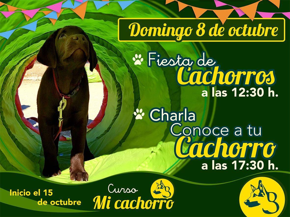 Fiesta de Cachorros Baucan Calvarrasa de Abajo Octubre 2017