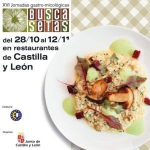 XVI Jornadas Gastro-Micológicas Buscasetas Salamanca 2017
