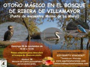 Aquila Naturaleza Otoño Mágico en el Bosque de Ribera de Villamayor Noviembre 2017