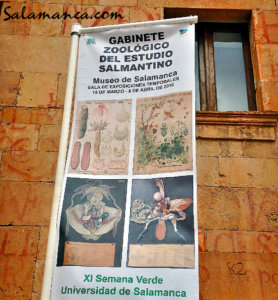 Museo de Salamanca Gabinete Zoológico del Estudio Salmantino Marzo abril 2018