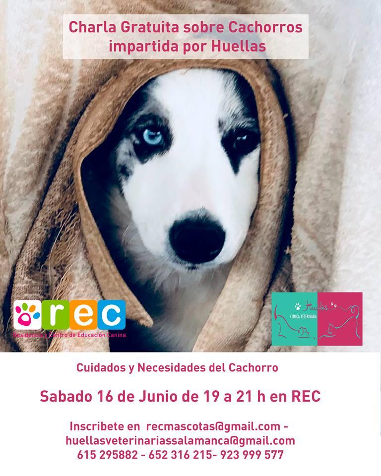 Clínica Huellas Cachorros Salamanca Junio 2018
