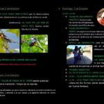 Salamanca Día de las Aves 2018 5-7 Octubre