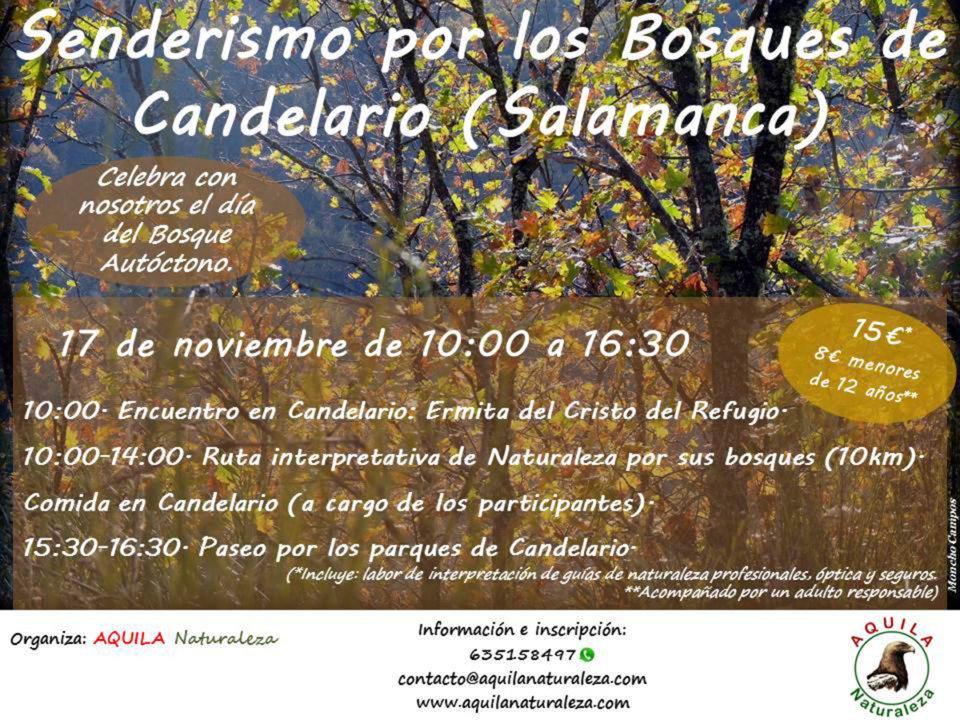 Aquila Naturaleza Senderismo por los bosques de Candelario Noviembre 2019