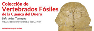 Ciencias y Ciencias Químicas Colección de vertebrados fósiles en la Cuenca del Duero Salamanca 2019-2020