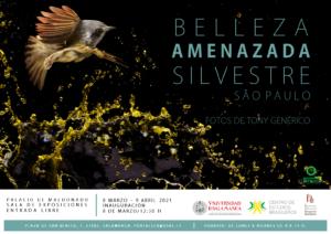 Centro de Estudios Brasileños Tony Genérico Salamanca 2021