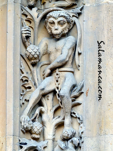 Bestiario de la Catedral Nueva de Salamanca... Mono