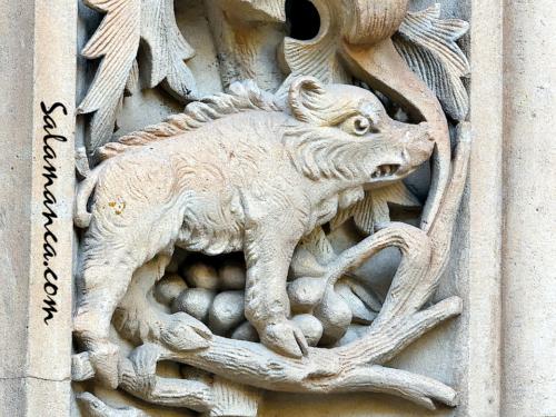Bestiario de la Catedral Nueva de Salamanca... Jabalí