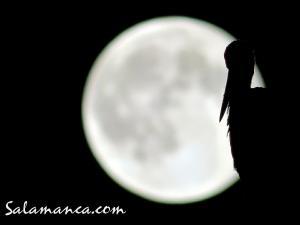 salamanca-aves-5