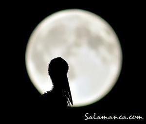 salamanca-aves-6