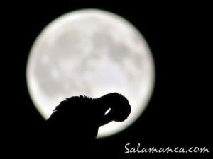 salamanca-aves-7
