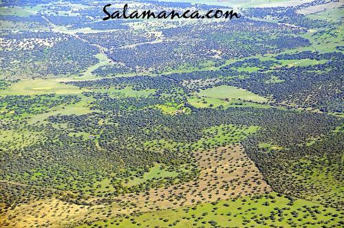 Salamanca, un mar de encinas