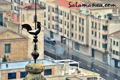 Salamanca, a vista de Gallo