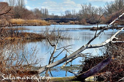 Salamanca, febrero junto al Tormes (y II)