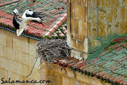 Sobrevolando Salamanca (I)