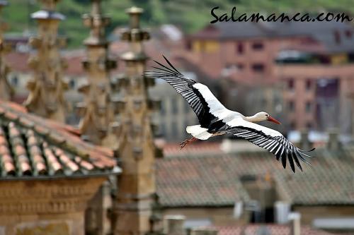 Sobrevolando Salamanca (y II)