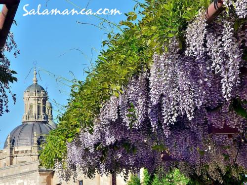 Salamanca, desde la calle Balmes (II)