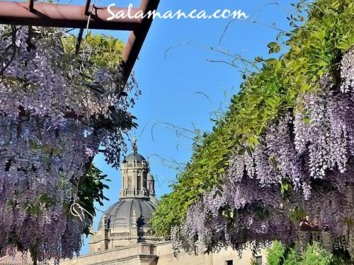 Salamanca, desde la calle Balmes (I)