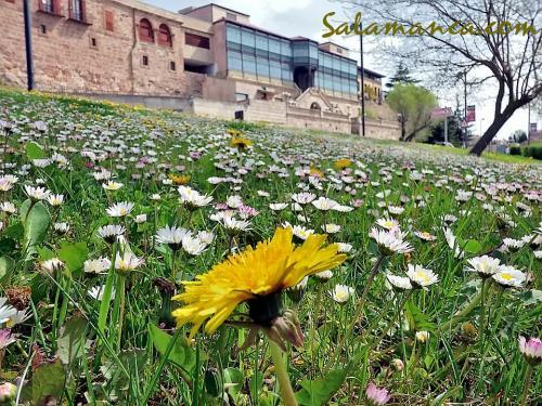Salamanca y Casa Lis... De primavera