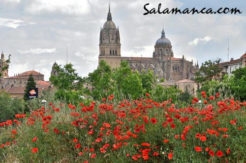Salamanca, una estampa de primavera