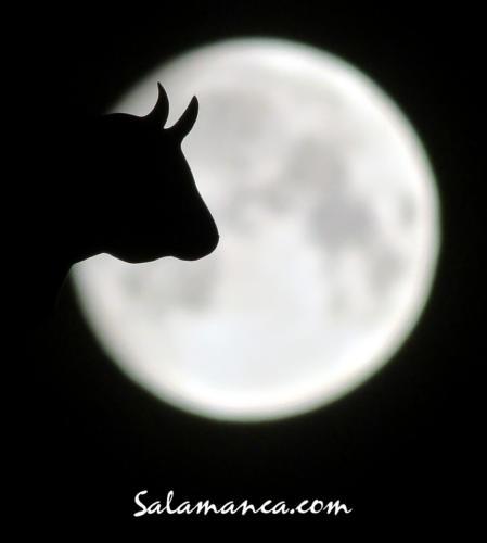 La Mariseca mirándose en la Luna