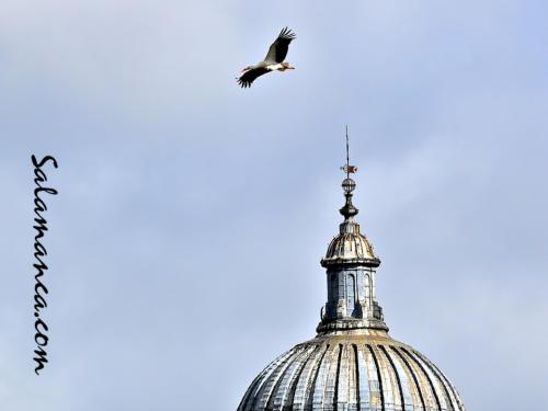 Salamanca, sobrevolando el cielo