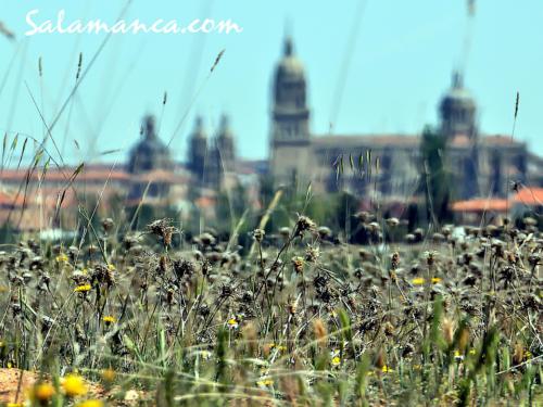 Salamanca despierta entre flores de primavera