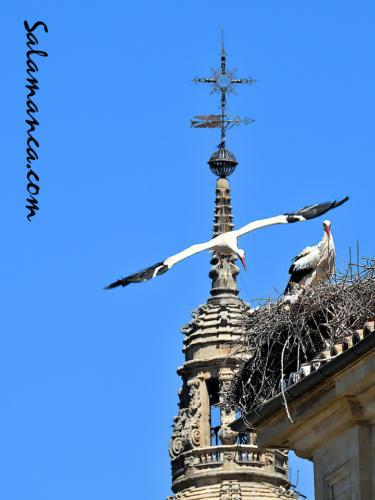 Salamanca, despegando