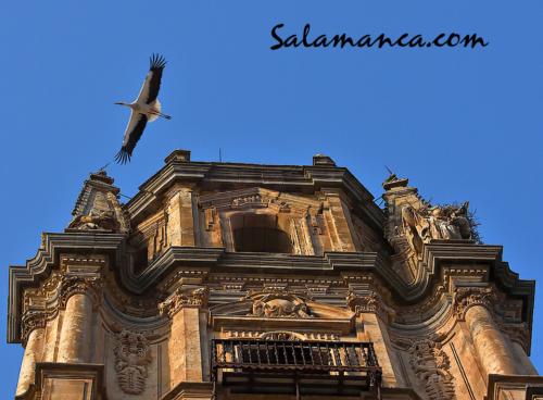 Y volvieron las cigüeñas a volar entre los cielos de Salamanca