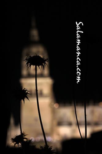 Salamanca, esas noches de agosto y de verano