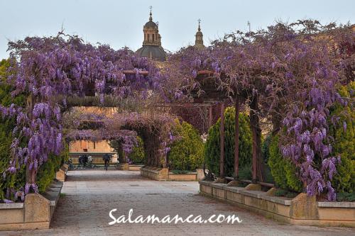 Salamanca y su clásico primaveral desde la calle Balmes