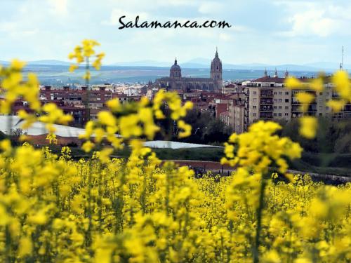 Amarillo para una Ciudad Dorada